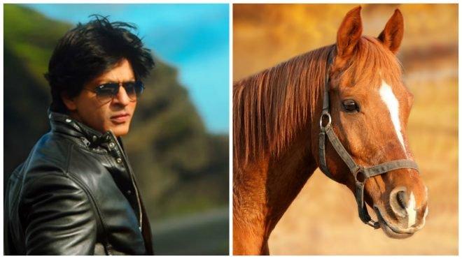 Shah Rukh Khan fear of horse